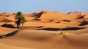 ITINERANCE ACCOMPAGNEE, DESERT MAROCAIN @ Vallée du Draa jusqu'à Ouled Driss, Maroc