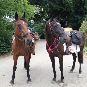 Itinérance avec le cheval